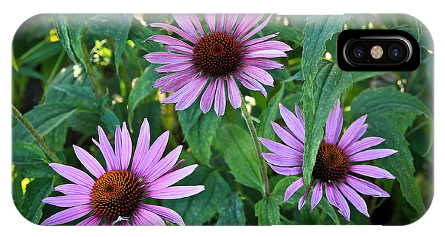 Flowers IPhone X Case featuring the photograph Three Coneflowers by Steve McKinzie