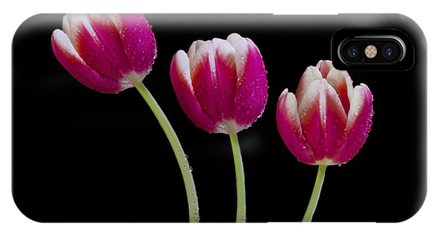 Tulip IPhone X Case featuring the photograph Three Of A Kind by Susan Candelario