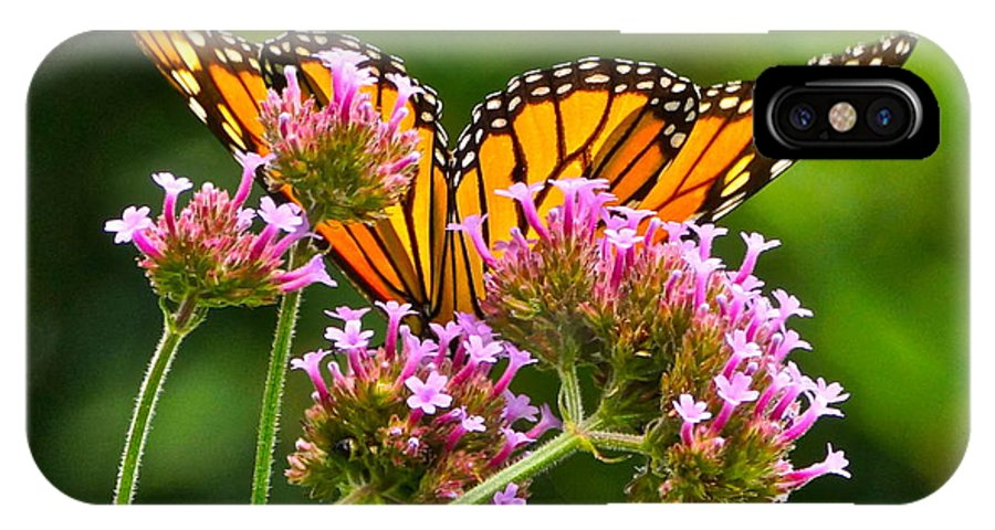 Monarch Butterfly On Pink Flowers IPhone X Case featuring the photograph Tiffany Wings And Flowers by Byron Varvarigos