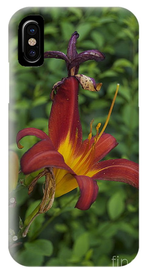 Tiger Lilly Photographs IPhone X Case featuring the photograph Tiger Lilly by Catherine Conroy