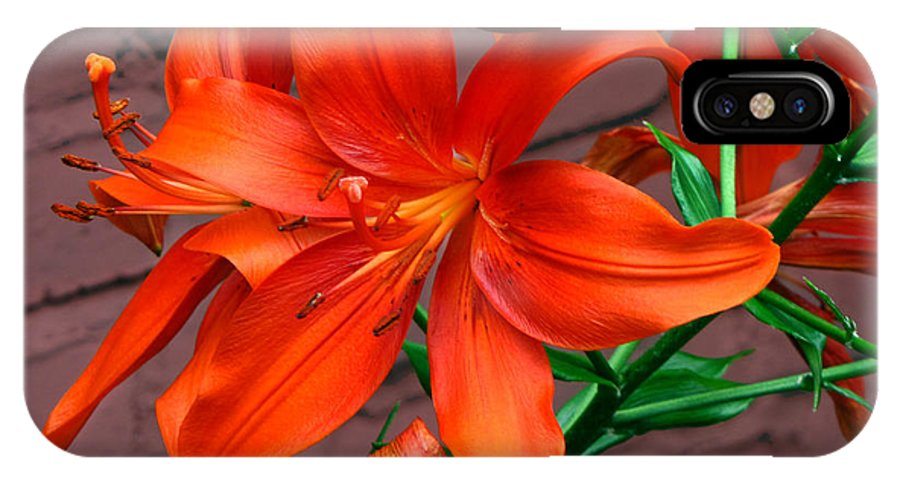 Tiger Lily Flower IPhone X Case featuring the photograph Tiger Lily by Denise Keegan Frawley