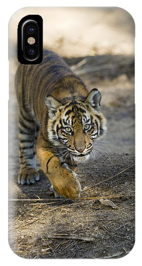 Mp IPhone X Case featuring the photograph Tiger Panthera Tigris Cub, Native by Zssd