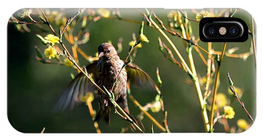 New Mexican Birds IPhone X Case featuring the photograph Tiny Bird In Wild Lettuce by Susanne Still