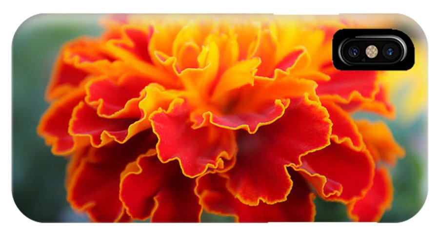 Tiny Flame IPhone X Case featuring the photograph Tiny Flame 2 by Rachel Cohen