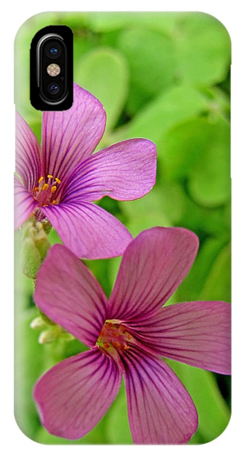 Nature IPhone X Case featuring the photograph Tiny Flowers In The Clover by Debbie Portwood