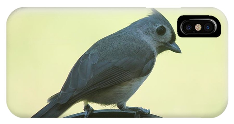 Titmouse IPhone X Case featuring the photograph Titmouse On A Perch by Theresa Willingham