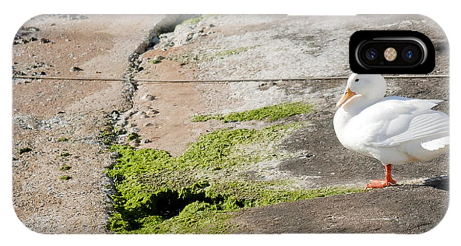Sea IPhone X Case featuring the photograph to swim or not to swim - A beautiful white duck ready to get into the sea or not by Pedro Cardona Llambias