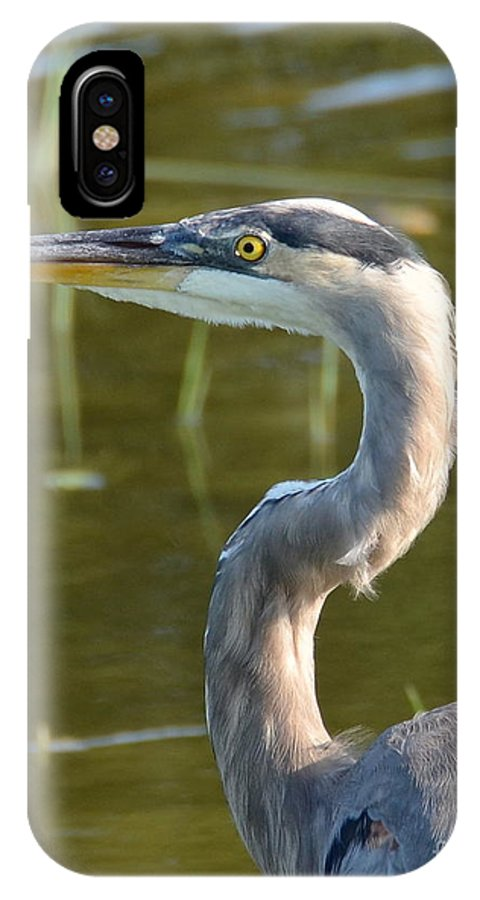 Heron IPhone X Case featuring the photograph Too Close For Comfort by Carol Bradley
