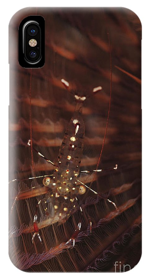 Macro IPhone X Case featuring the photograph Transparent Shrimp On A Brown Feather by Mathieu Meur