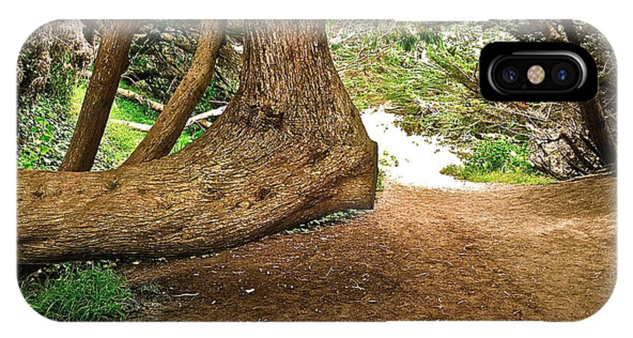 Tree IPhone X Case featuring the photograph Tree And Trail by Bill Owen
