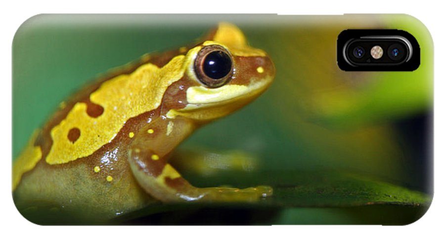 Frog IPhone X Case featuring the photograph Tree Frog Dream by Paul Slebodnick