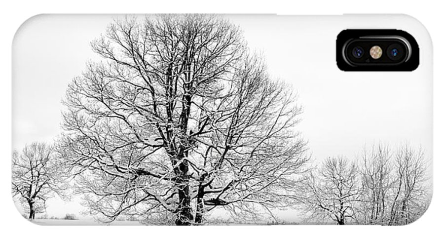 Winter IPhone X Case featuring the photograph Trees In Winter by Michal Boubin