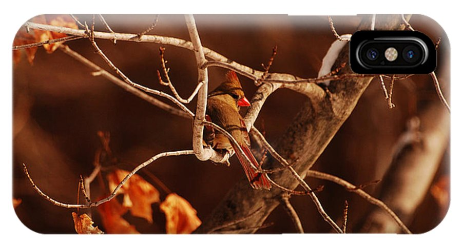 Cardinal IPhone X Case featuring the photograph Trying To Blend In by Lori Tambakis