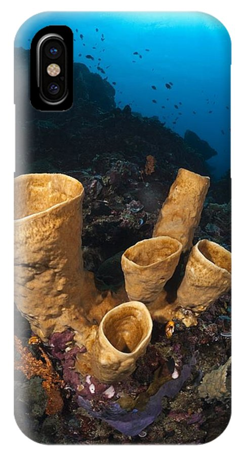 Animal IPhone X / XS Case featuring the photograph Tube Sponges by Matthew Oldfield