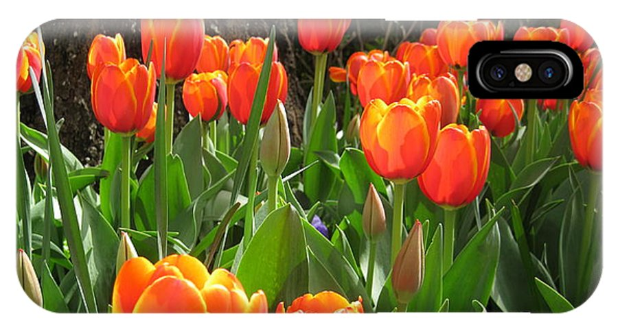Flowers IPhone X Case featuring the photograph Tulip Time by Margaret Hodgson