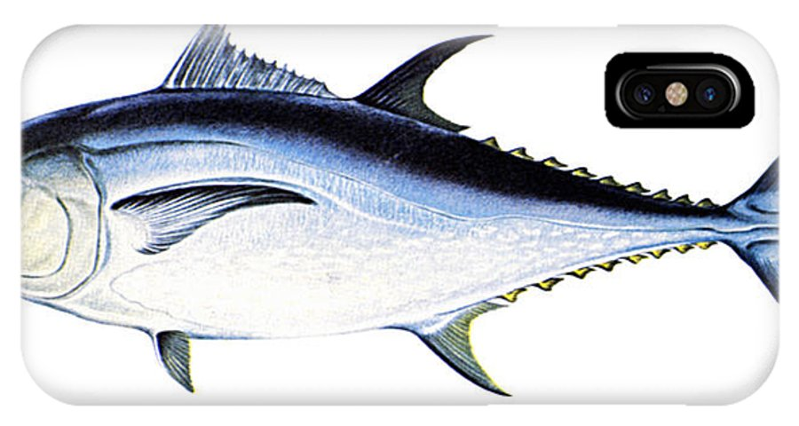 Biology IPhone X Case featuring the photograph Tuna by Granger