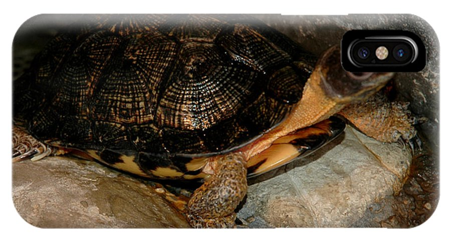 Usa IPhone X / XS Case featuring the photograph Turtle Time On The Rocks by LeeAnn McLaneGoetz McLaneGoetzStudioLLCcom