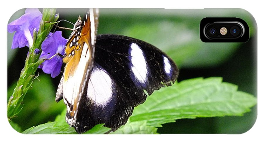 Butterfly IPhone X Case featuring the photograph Two Faced by Peggy King