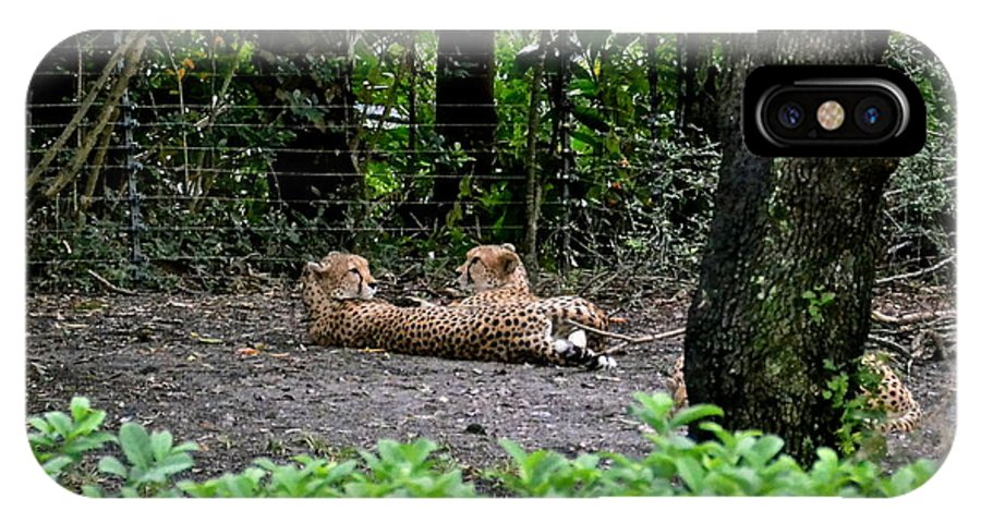 Cheetah IPhone X / XS Case featuring the photograph Two Headed Cheetah by Carol Bradley