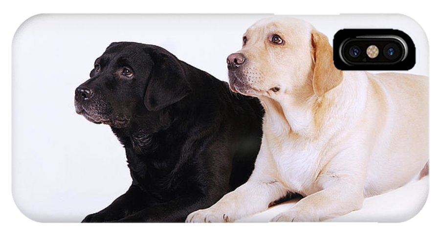 Animal IPhone X Case featuring the photograph Two Labs by Waldek Dabrowski