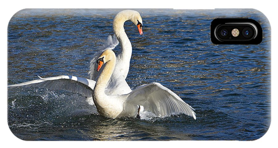 Swan IPhone X Case featuring the photograph Two Swans Playing by Mats Silvan