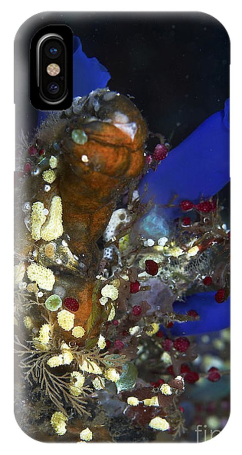Ascidians And Sea Squirts IPhone X Case featuring the photograph Underwater Bouquet Formed By Cluster by Mathieu Meur