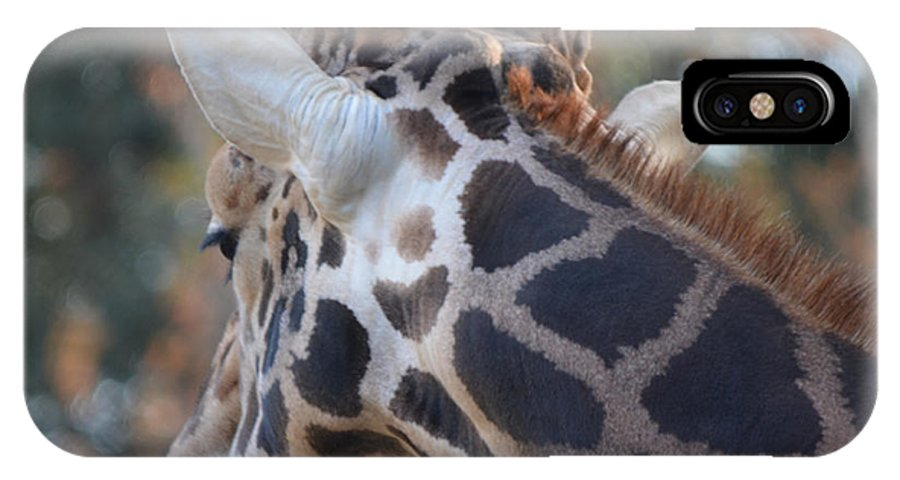 Giraffe IPhone X Case featuring the photograph Up Close And Personal by Maggy Marsh