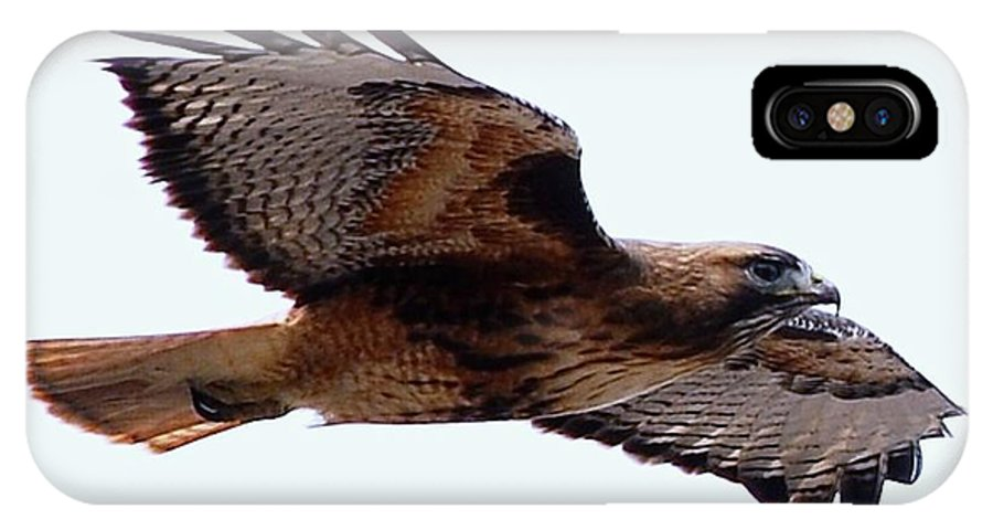 Hawks IPhone X Case featuring the digital art Up Close Fly-by by Don Mann