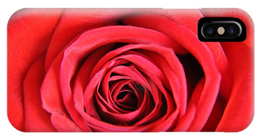 Teresa Blanton IPhone X Case featuring the photograph Vein Rose by Teresa Blanton