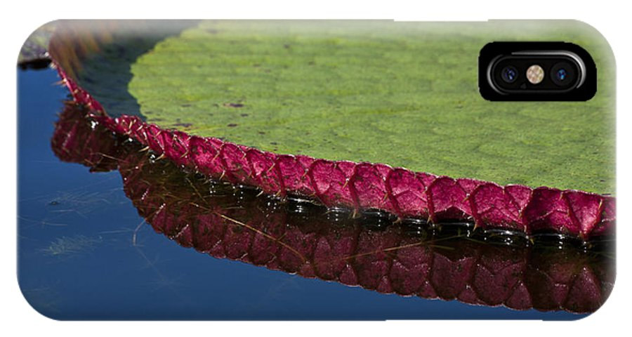 Victoria IPhone X Case featuring the photograph Victoria Amazonica Leaf by Heiko Koehrer-Wagner
