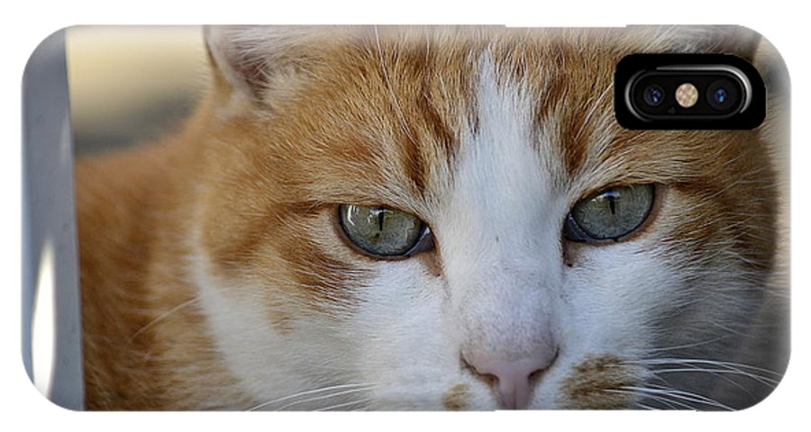 Cat IPhone X Case featuring the photograph Vulnerable by Fraida Gutovich