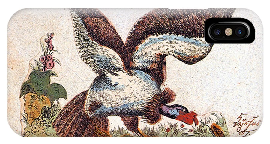 19th Century IPhone X Case featuring the photograph Vulture Attacking A Snake by Granger