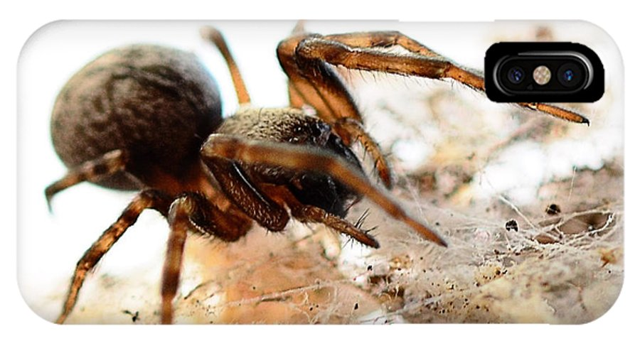 Spider IPhone X Case featuring the photograph Waiting by Chriss Pagani