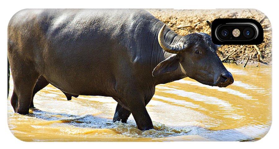 Water Buffalo IPhone X Case featuring the photograph Water Buffalo by Douglas Barnard
