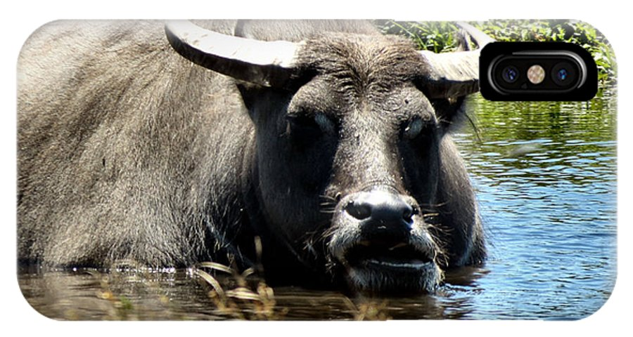 Water IPhone X Case featuring the photograph Water Buffalo by Art Dingo