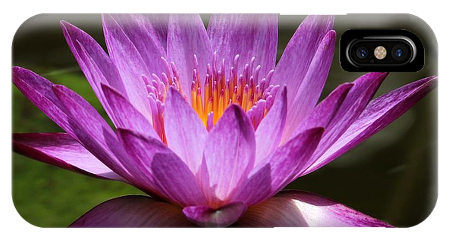 Water Lily IPhone X Case featuring the photograph Water Lily Blossom by Sabrina L Ryan