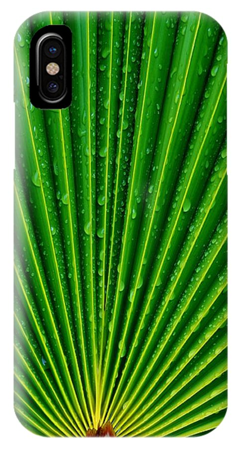Close Up; South Africa; Cycad; Leafs; Summer; Warm; Plant; Garden; Wet; Water; Blue; Drop; Green; Droplets; Background; Decorative; Lines; Texture; IPhone X Case featuring the photograph Waterdrops On Palm Leaf by Werner Lehmann