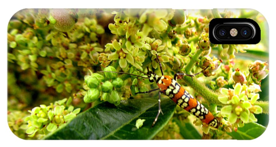 Tree IPhone X Case featuring the photograph Webworm Moth by Donna Brown