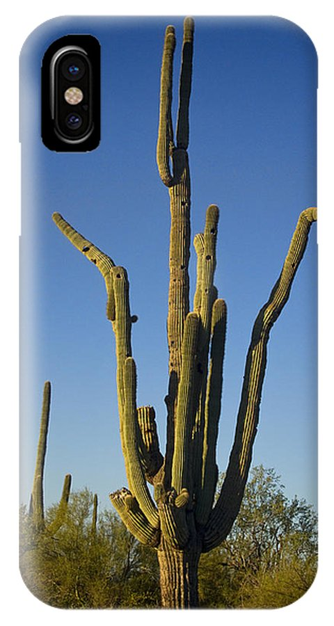 Weird IPhone X Case featuring the photograph Weird Giant Saguaro Cactus With Blue Sky by James BO Insogna