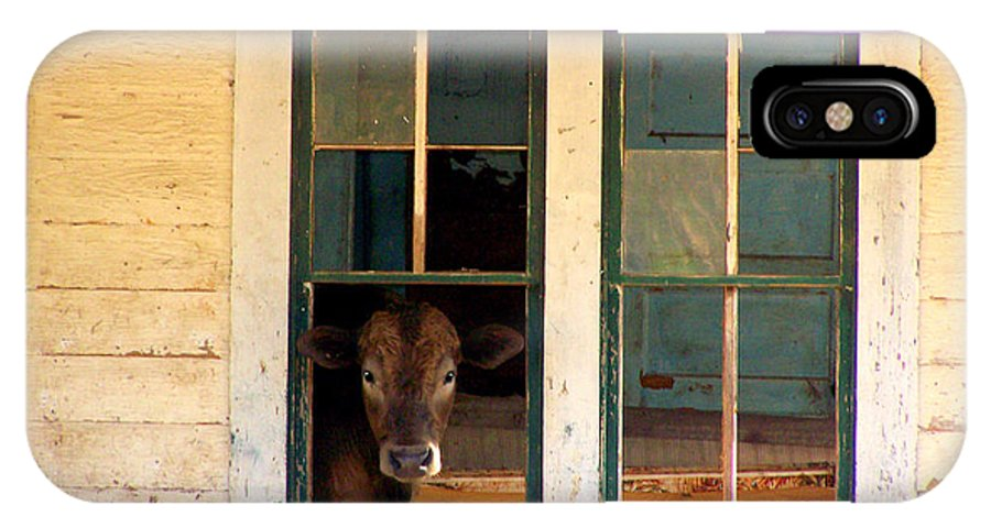Cow IPhone X Case featuring the photograph What Is For Dinner? by Kathy White
