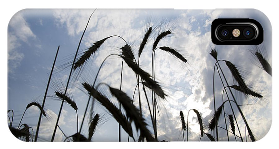 White IPhone X Case featuring the photograph Wheat With Blue Sky by Mats Silvan