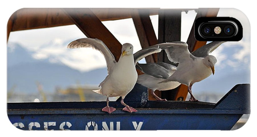 Seagulls IPhone X Case featuring the photograph Wheres The Fish by Debra Miller