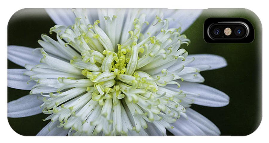 Flower IPhone X Case featuring the photograph White Aster by Fran Gallogly