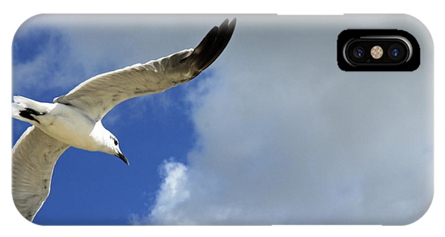 Birds IPhone X Case featuring the photograph White Glide by G Adam Orosco