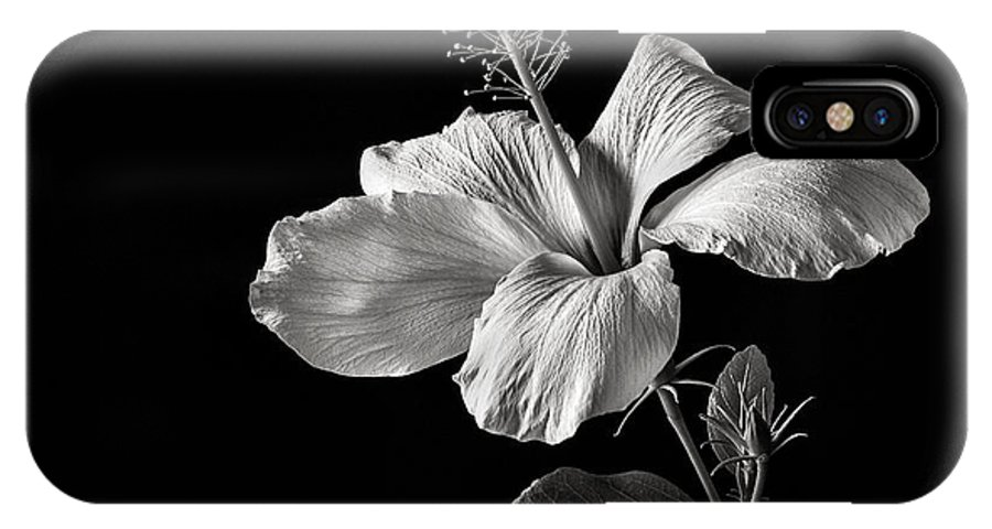 Flower IPhone X Case featuring the photograph White Hibiscus Inn Black And White by Endre Balogh