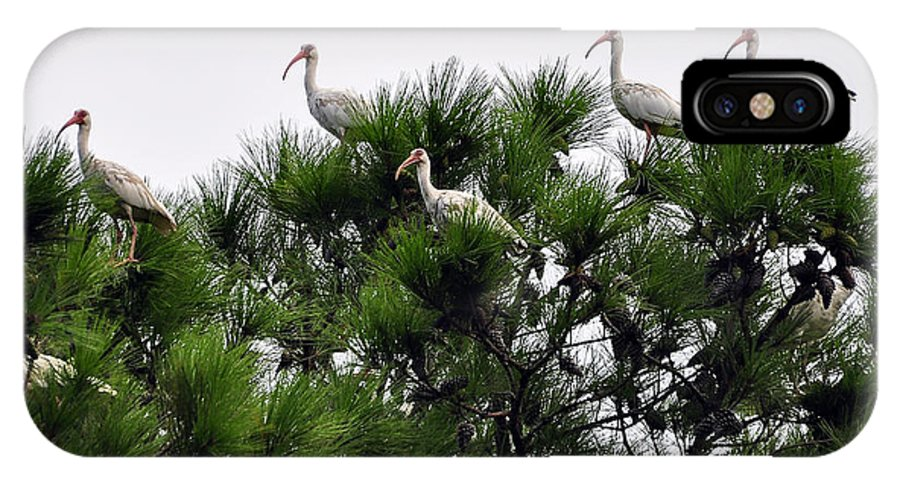 Ibis IPhone X Case featuring the photograph White Ibises Roosting by Al Powell Photography USA