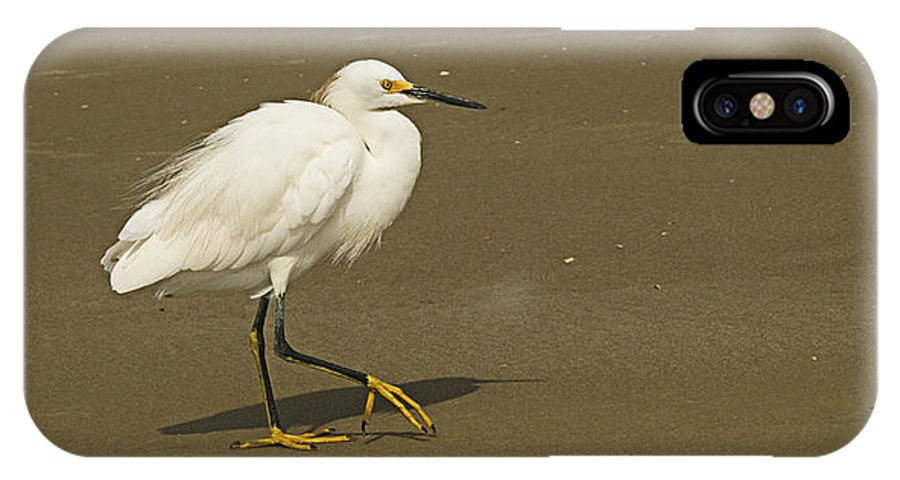 White Seabird IPhone X Case featuring the photograph White Seabird Walking by Barbara Middleton