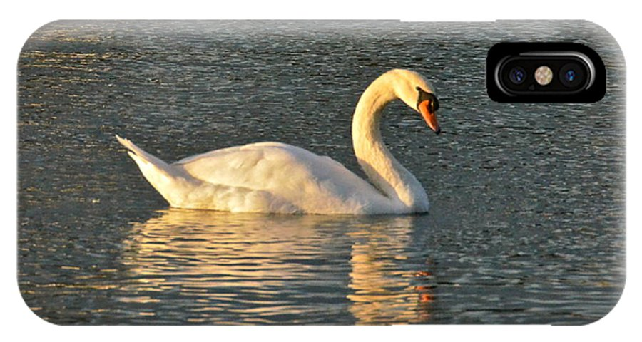 Swan IPhone X / XS Case featuring the photograph White Swan At Sunset by Carol Bradley