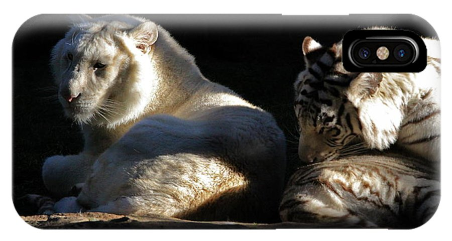 Tiger IPhone X Case featuring the photograph White Tiger And Lion by Kate Purdy