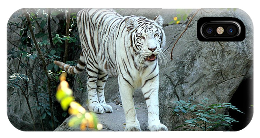 White Tiger IPhone X Case featuring the photograph White Tiger by Kathy White